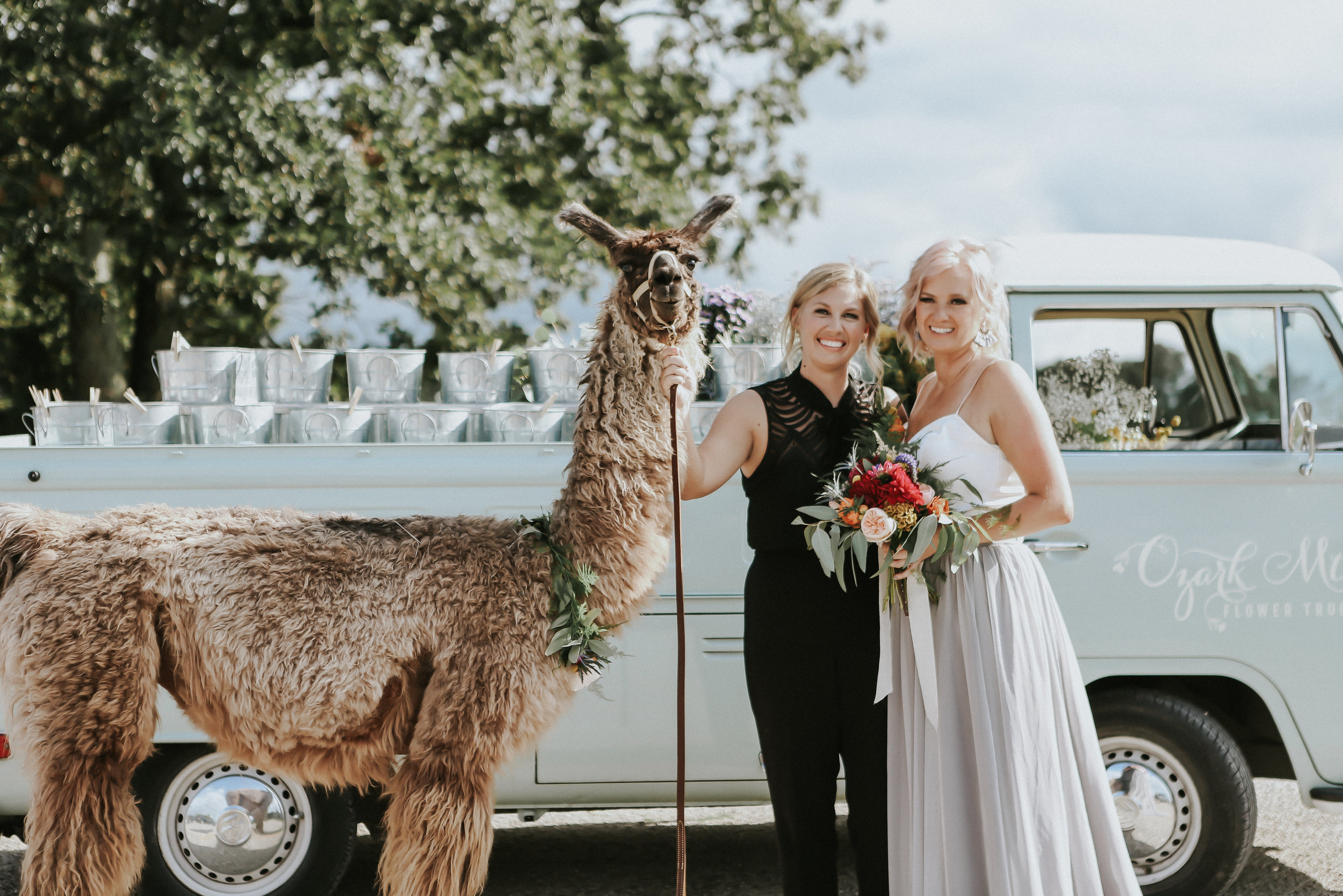 Natalee and Felicia have time to pose with Penny the Llama and Ozark Mtn. Flower Truck at their Greenhouse Two Rivers wedding since their wedding planner, Unions With Celia, took care of all the details.