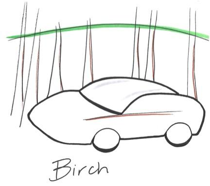 birch.jpeg