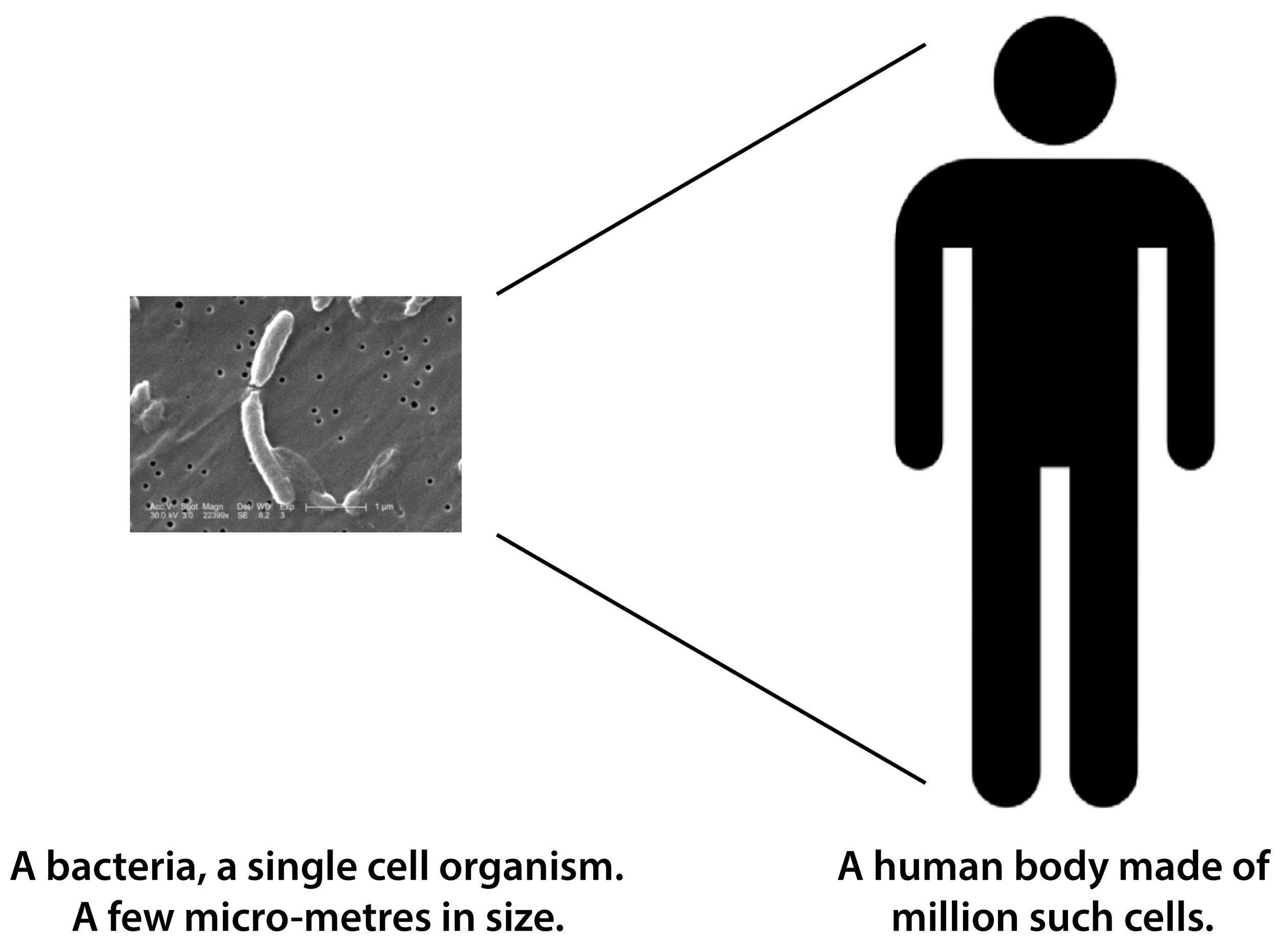 toxins - size comparison.jpg