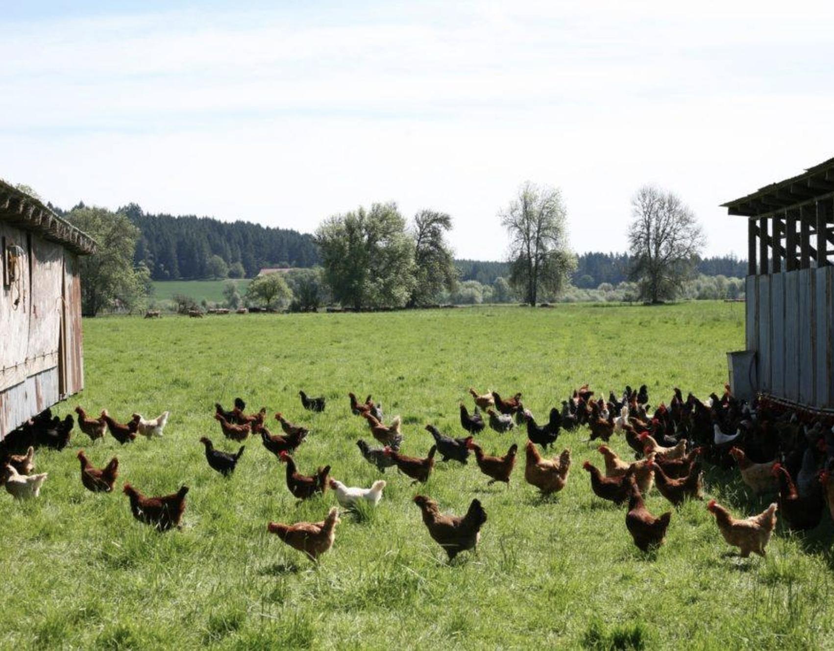 J-Bar Poultry.png