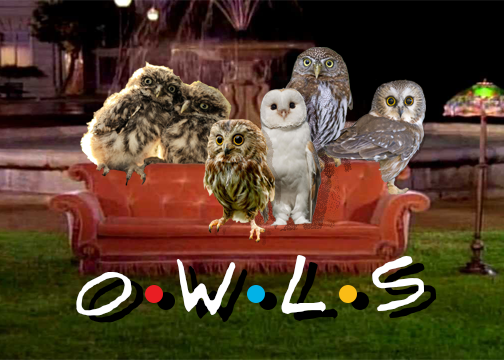 owlcard.png