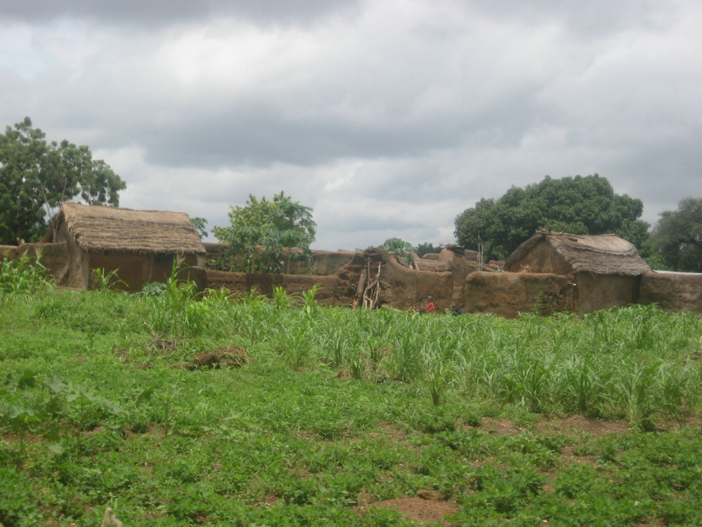 Farms During Rainy Season (Child Malnutrition is Big Problem in Dry Season)