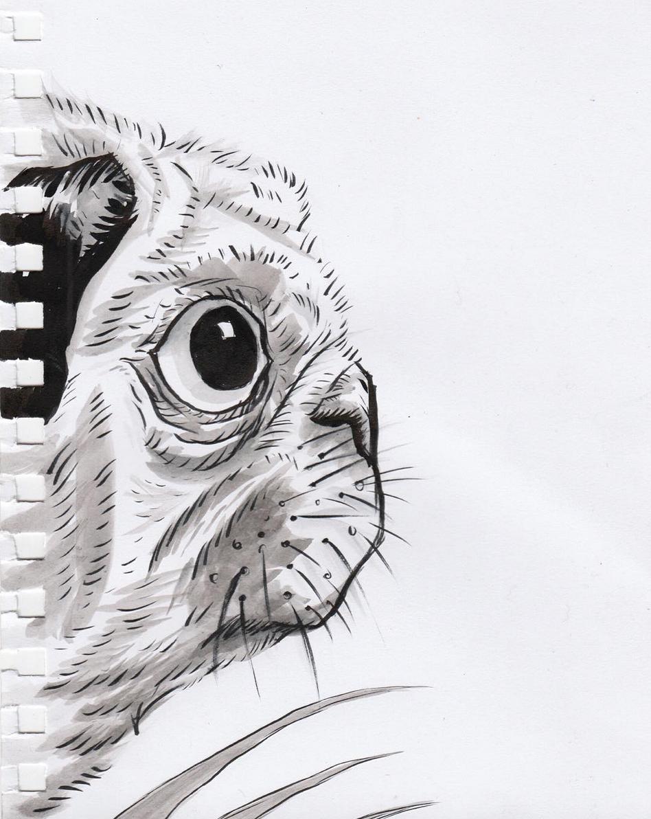the shy pug - robbieallenart.png