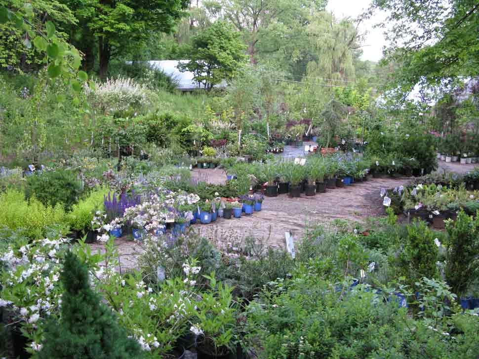 Victoria-Gardens-Nursery.jpg