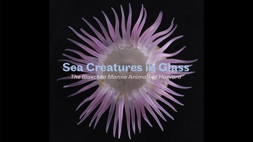 sea.creatures.web_.trl_.jpg