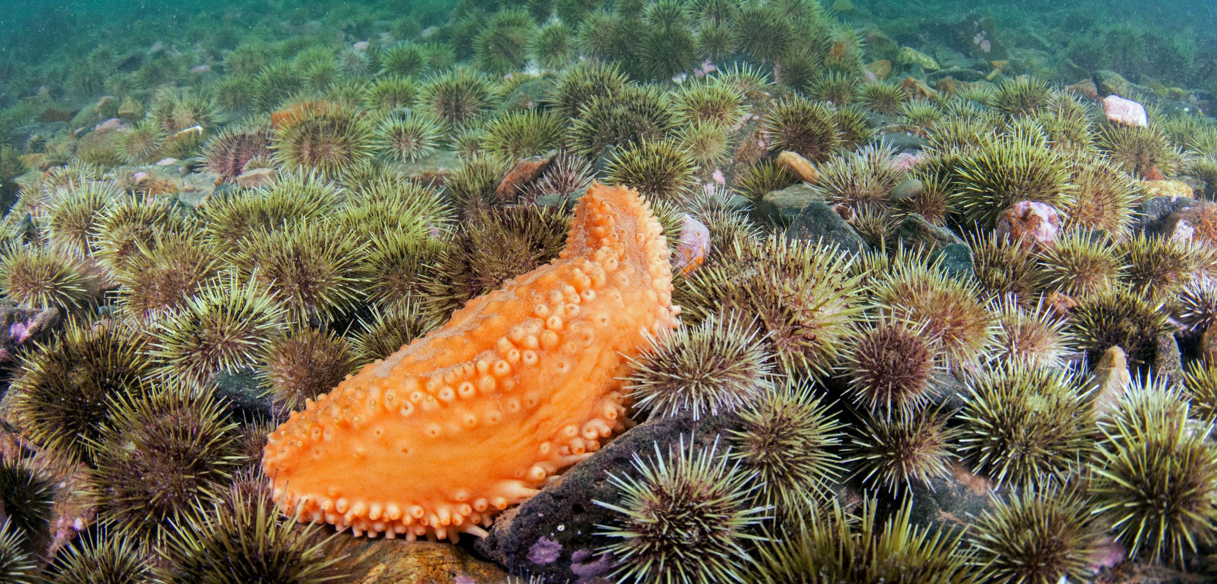 header-sea-cucumbers-1.jpg