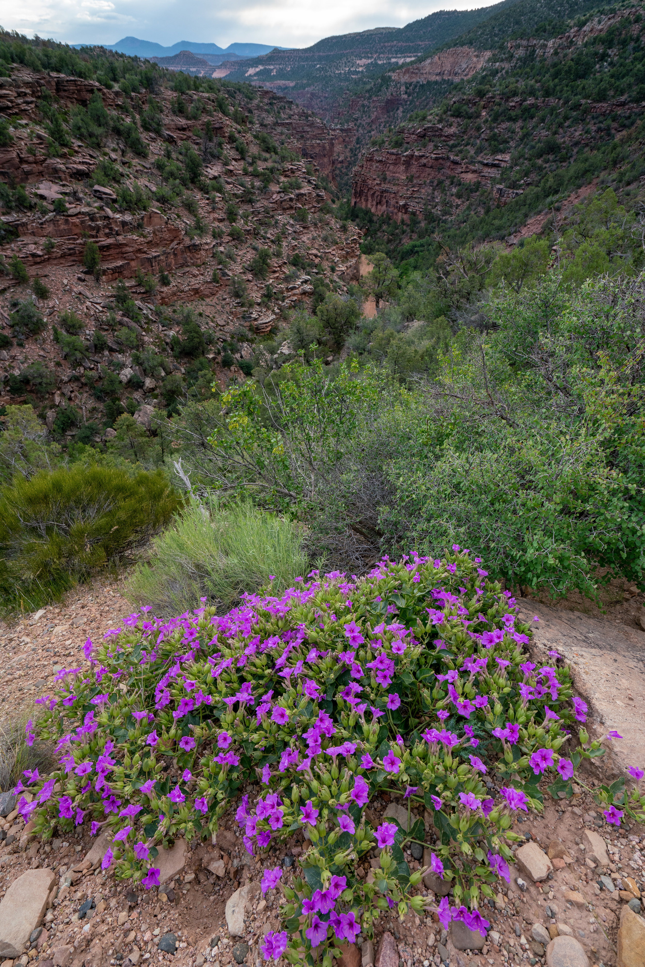 Canyon climb and rim flowers