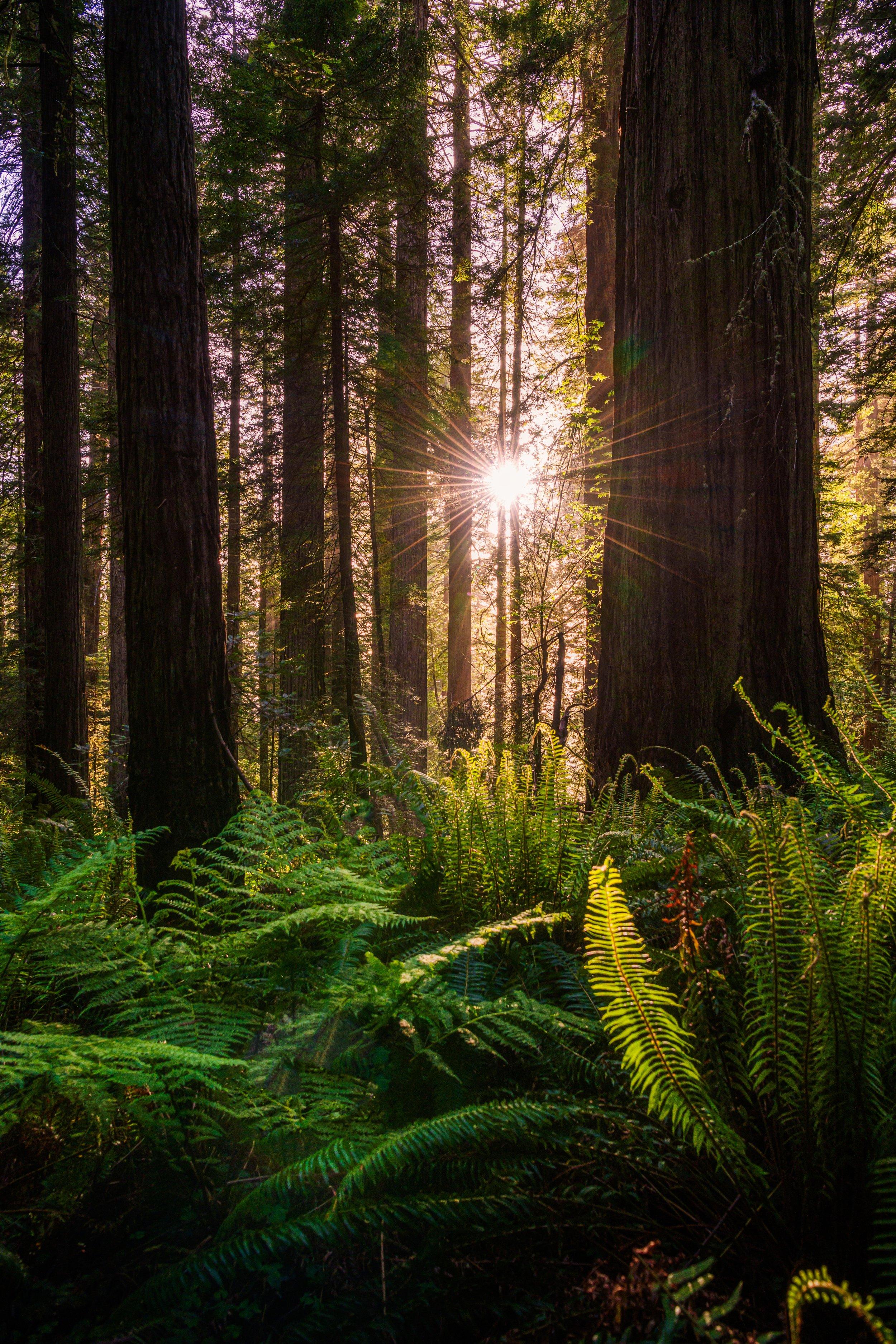 Seven Circles Sequoia.jpg
