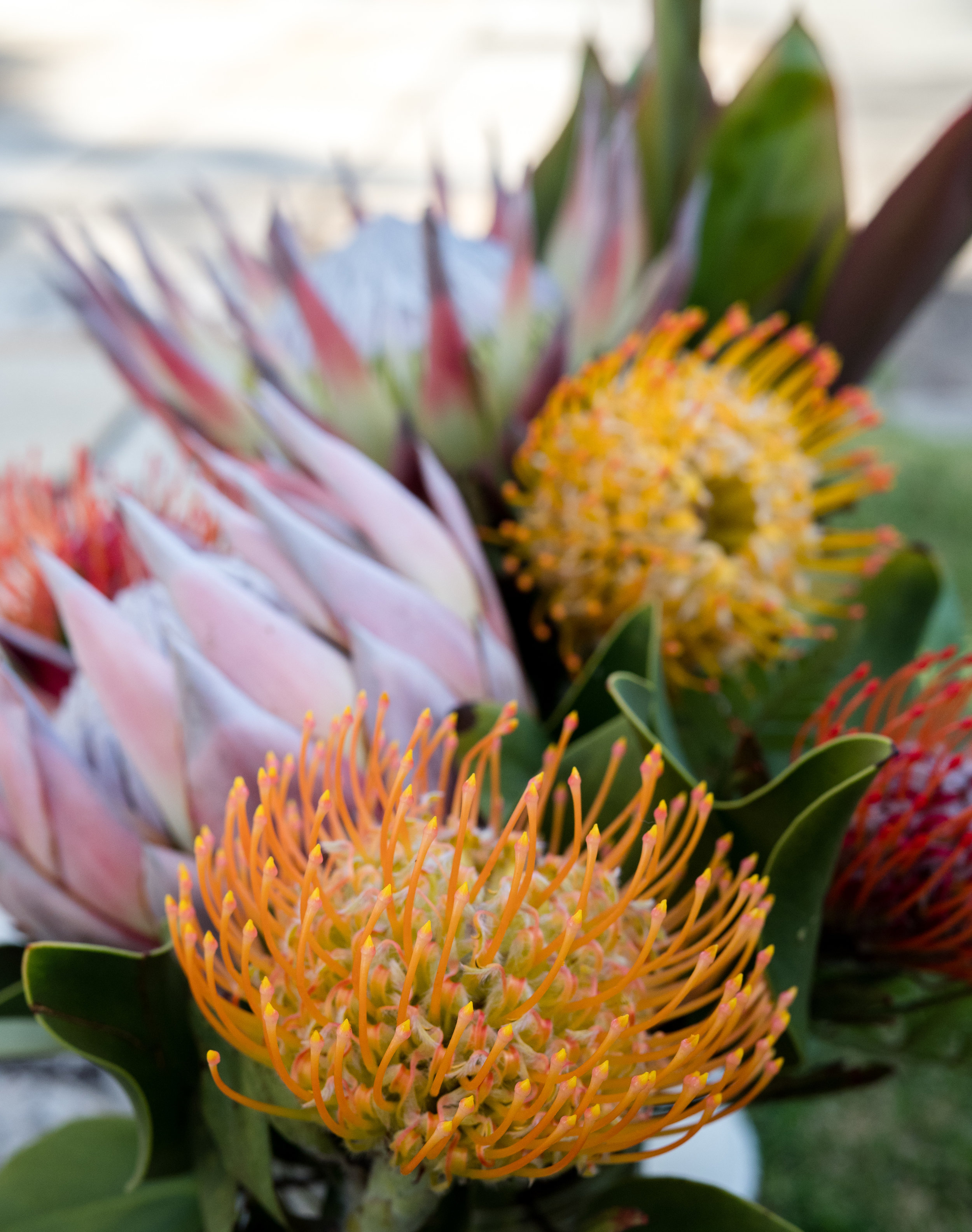 A Royal Hawaiian Mother's Day - Pink King Protea Flowers and Pincushions