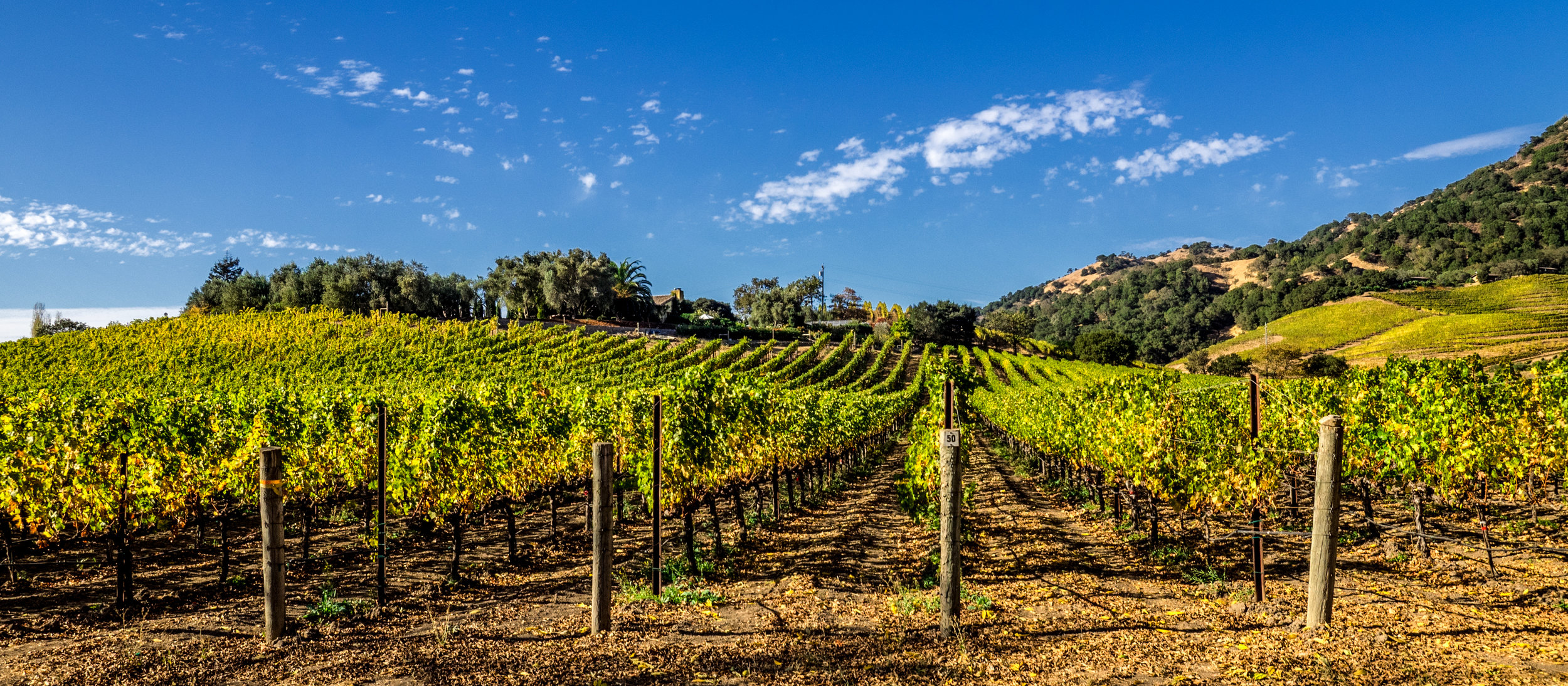 Jefferson would have been very fond of California's Napa Valley
