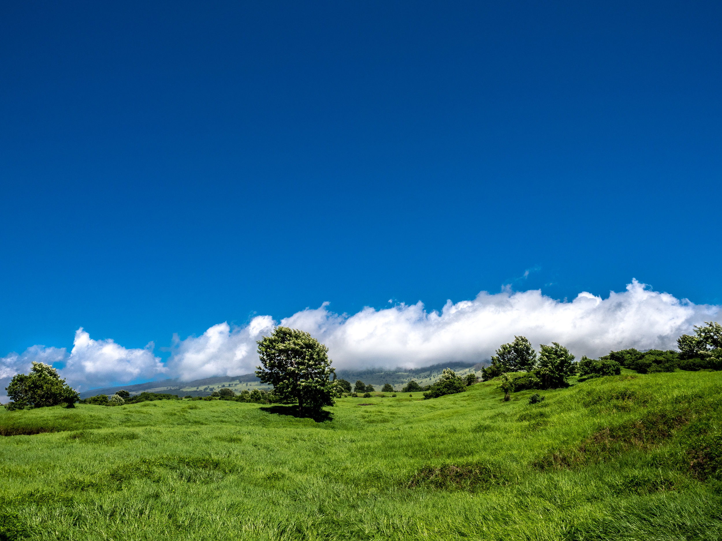 The rolling hills of Canterbury of volcanic slopes of Haleakalā?