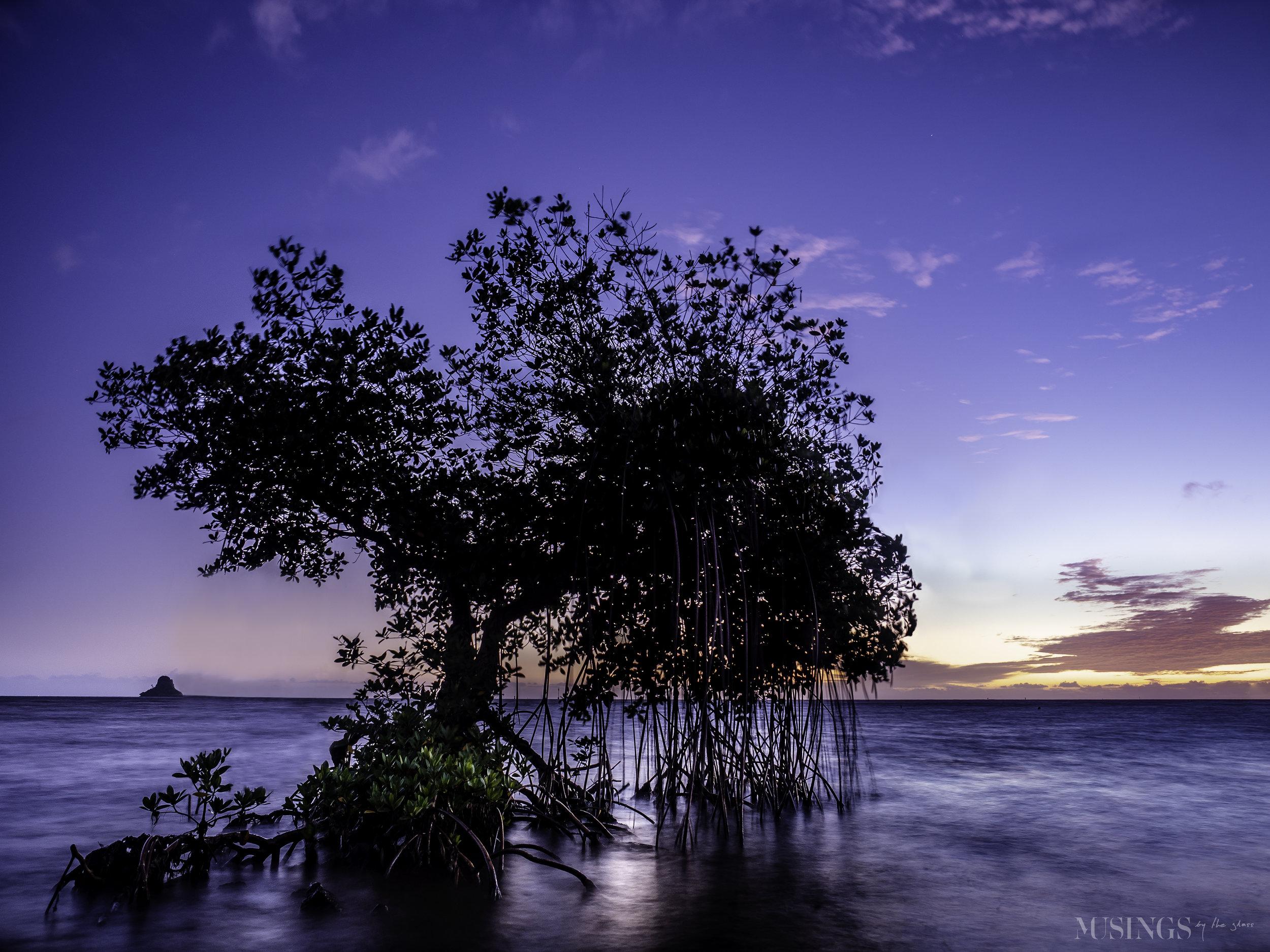 Floating Mangrove