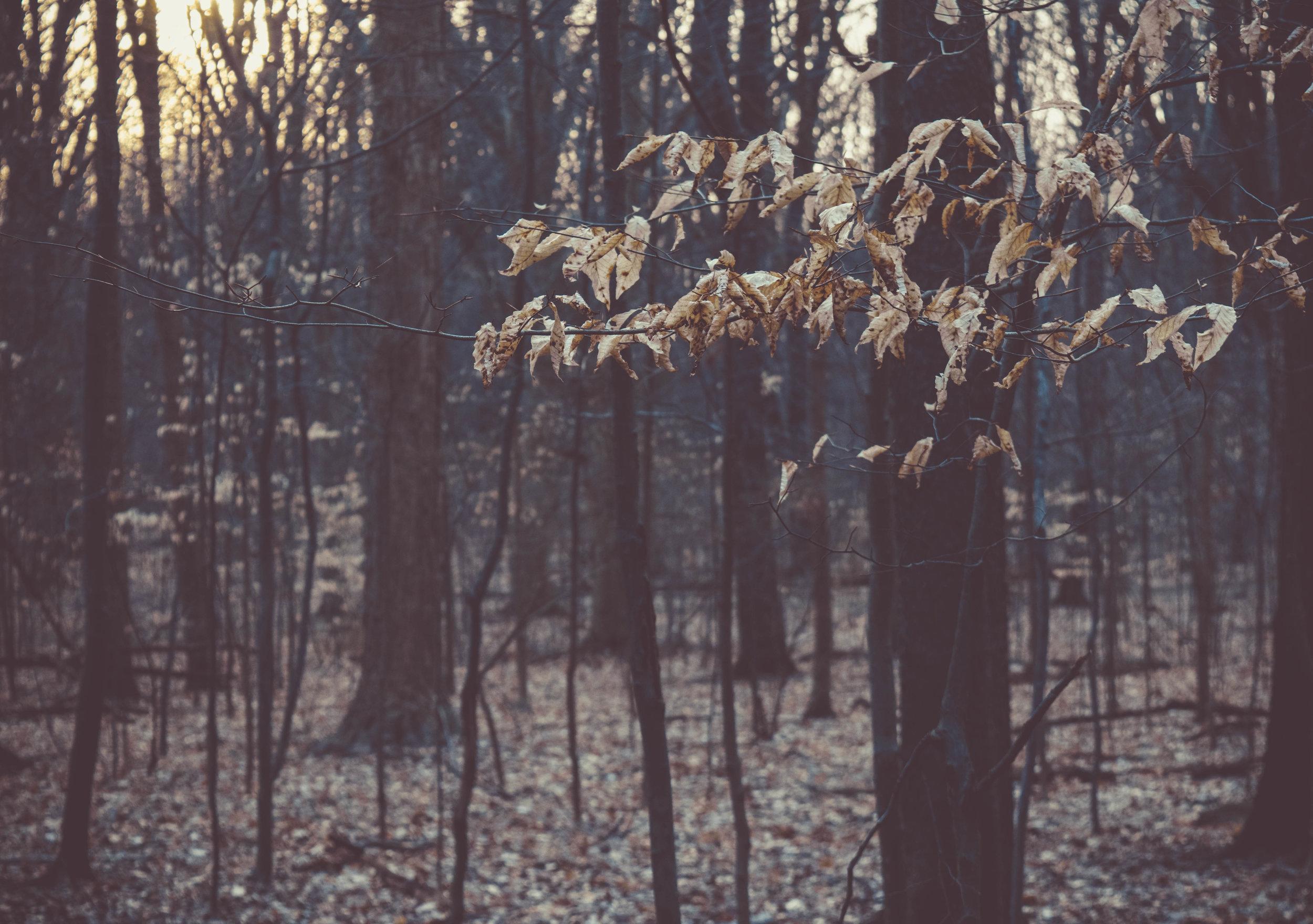 PhotoPrintingProject-10.jpg