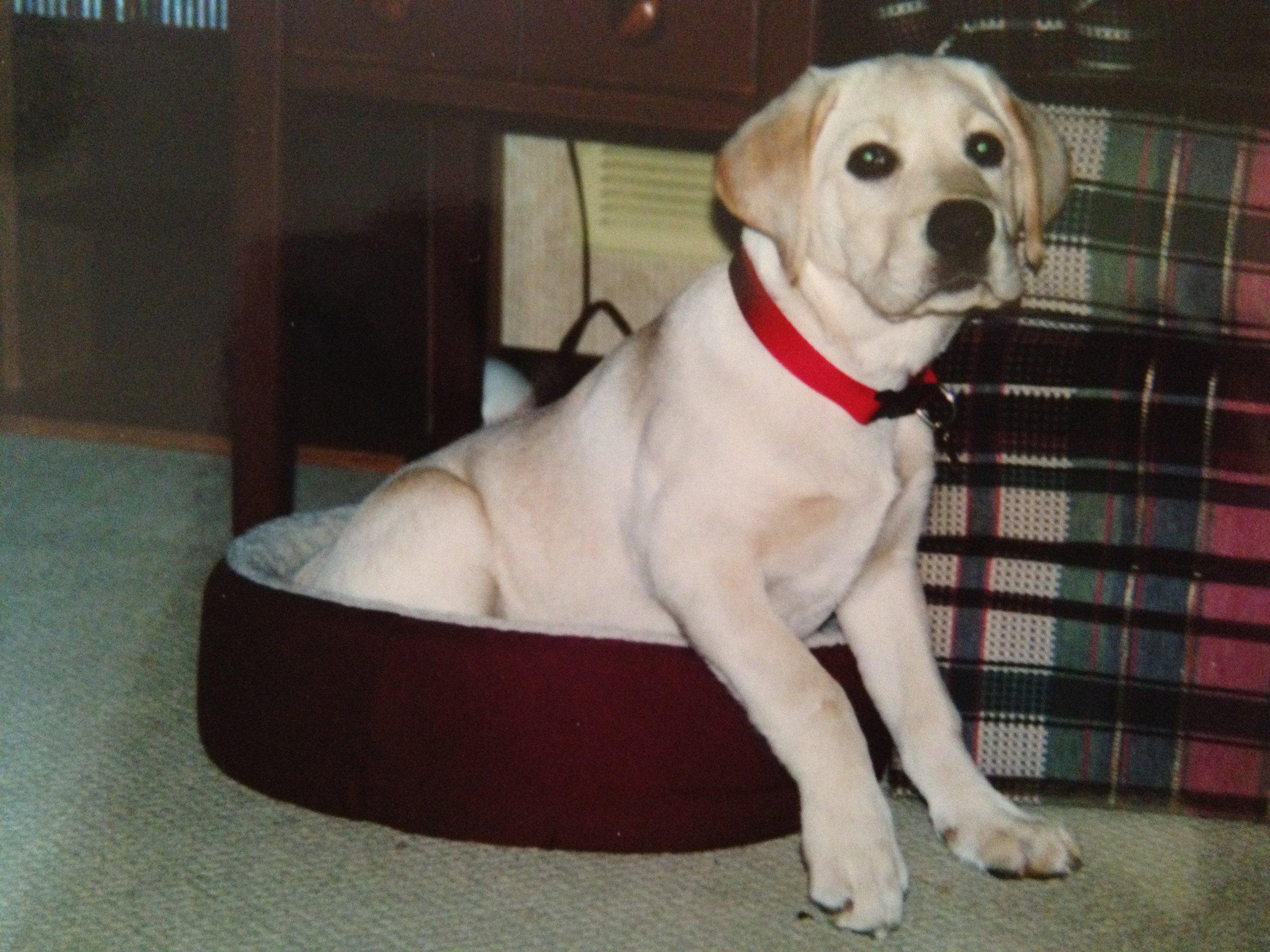 Daisy in Mr. Cat's Bed
