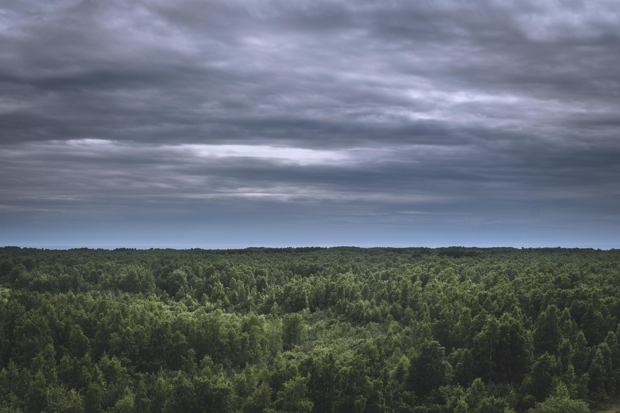 Näkymä metsän ylitse.