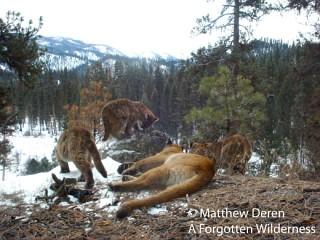 Mountain Lions photo by Matthew Deren