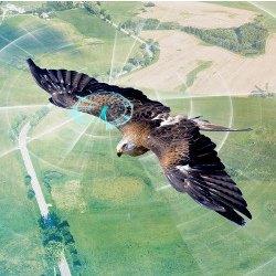 Credit: Andrij Borys Associates / Shutterstock - 021919_CACMpg69_Blogging-Birds1