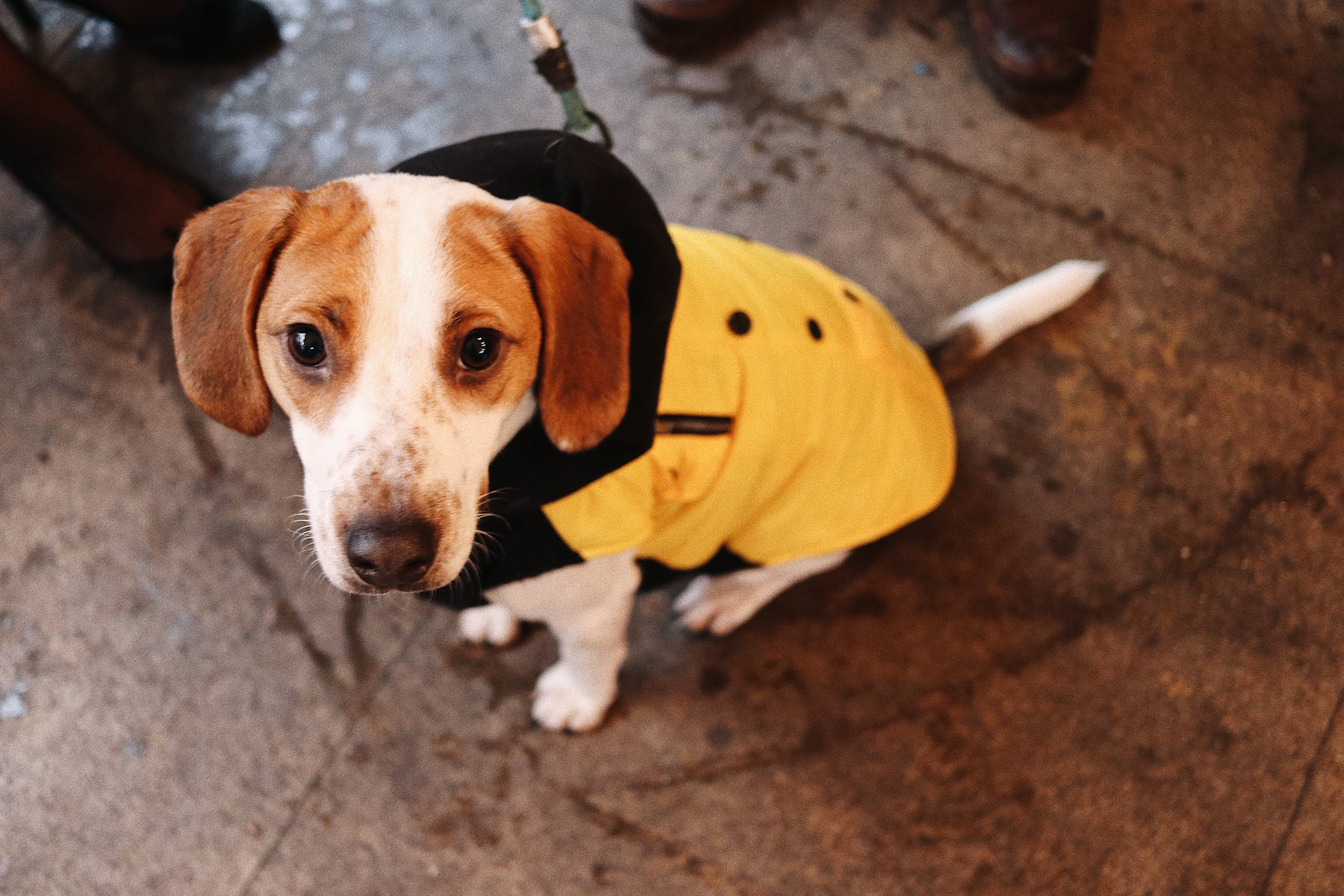 we are very dog friendly - Looking for places to eat with your dog? They can come along with or without awesome coat!