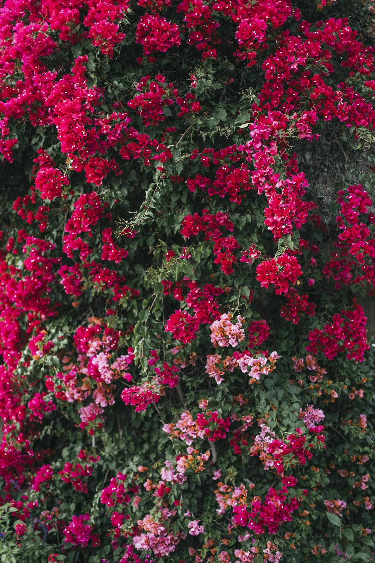 ARNA_FOTOGRAFIA_WEB_082.JPG
