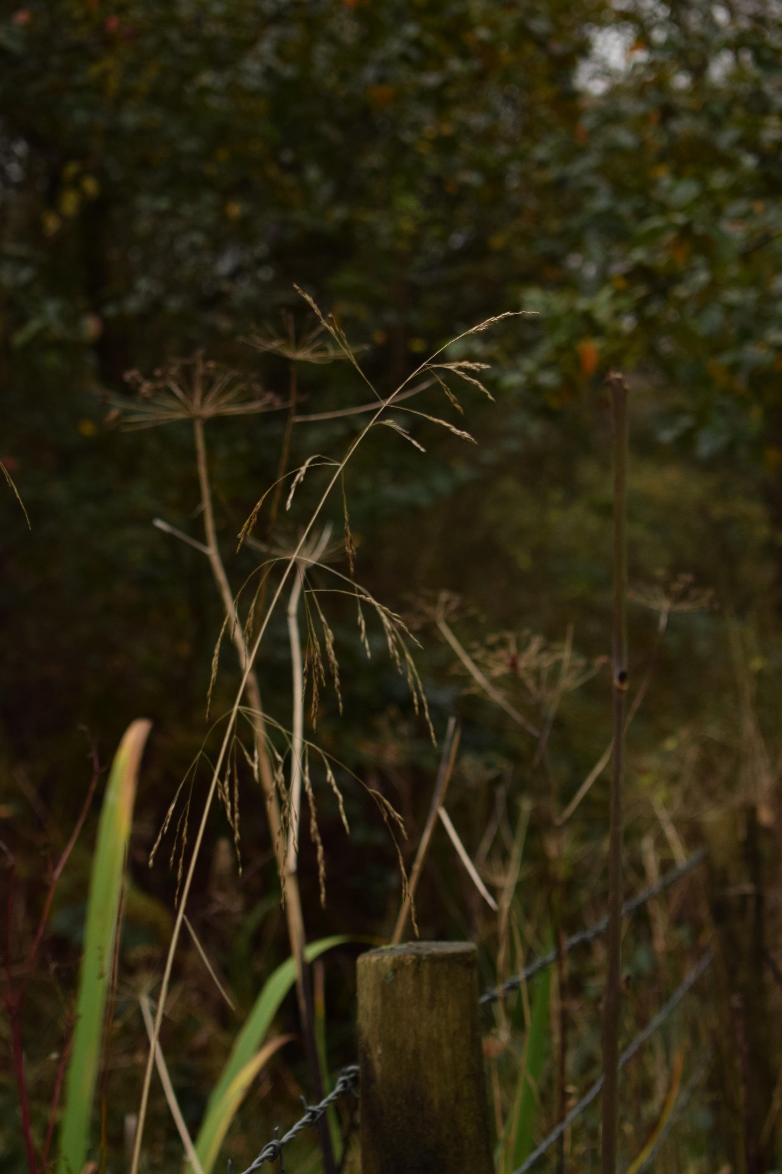autumn tangle.JPG