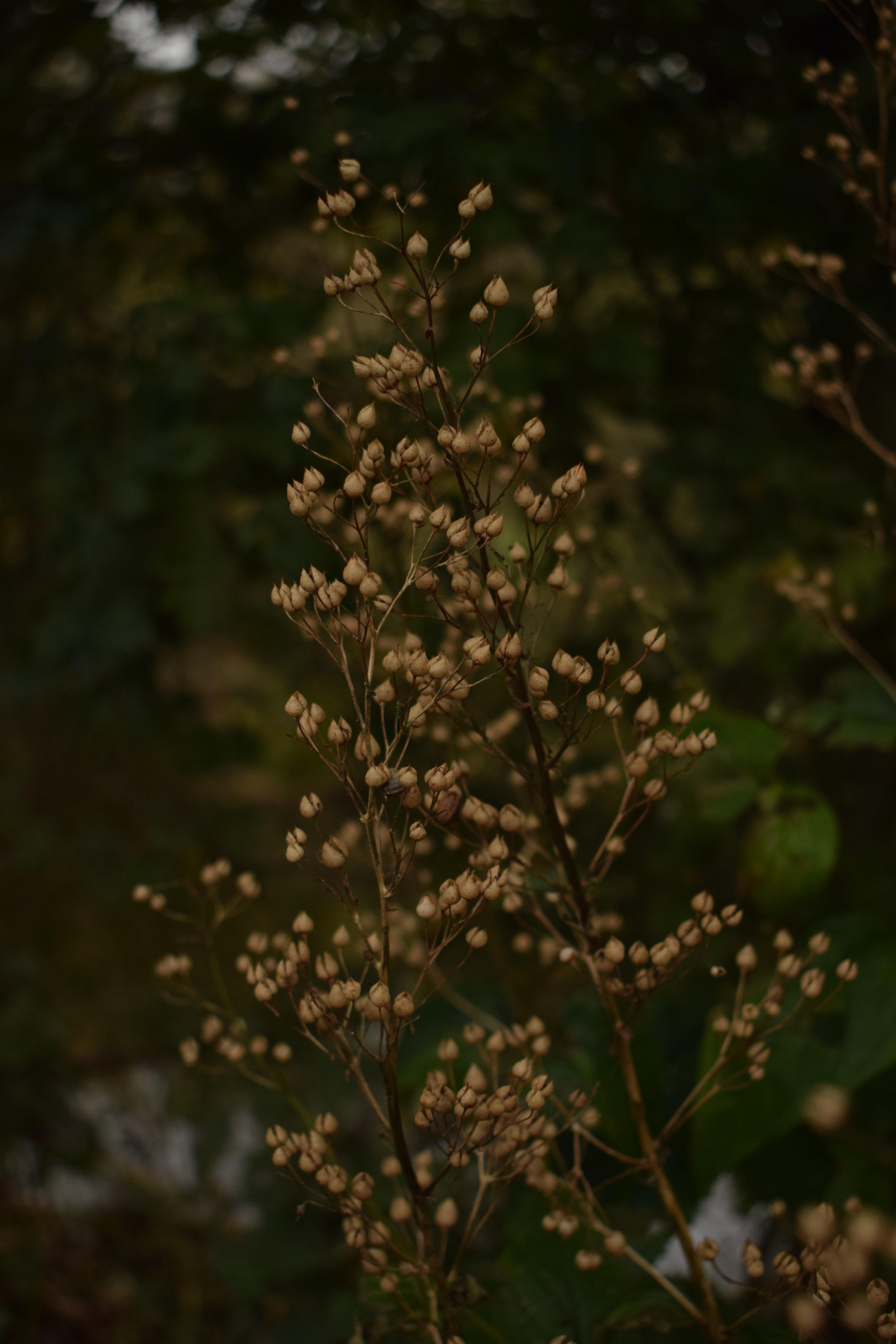 November seeds.JPG