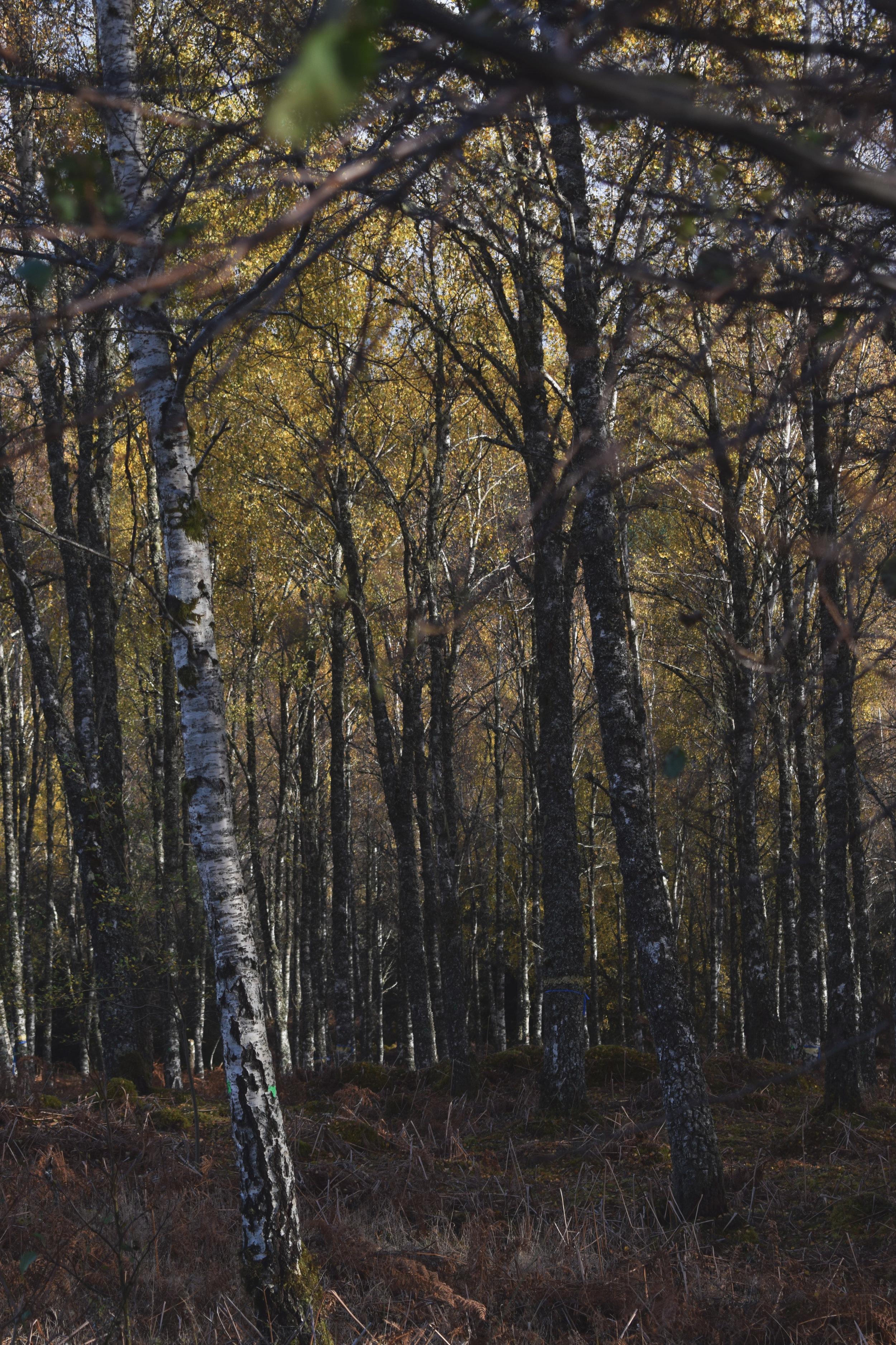 woodsr.jpg