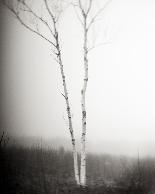 Two Birches