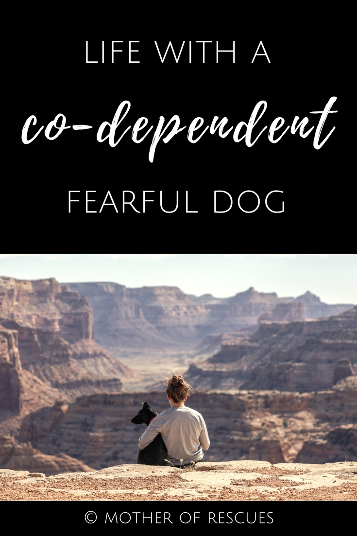 Share this on Pinterest for other rescue dog moms to see!  -