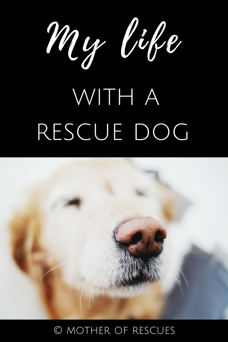 Share our story on Pinterest! -