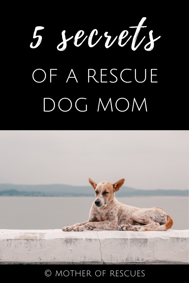 Share this article on Pinterest! -