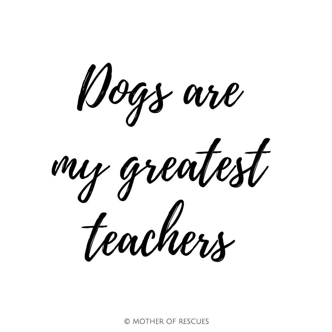 dogs-are-greatest-teachers