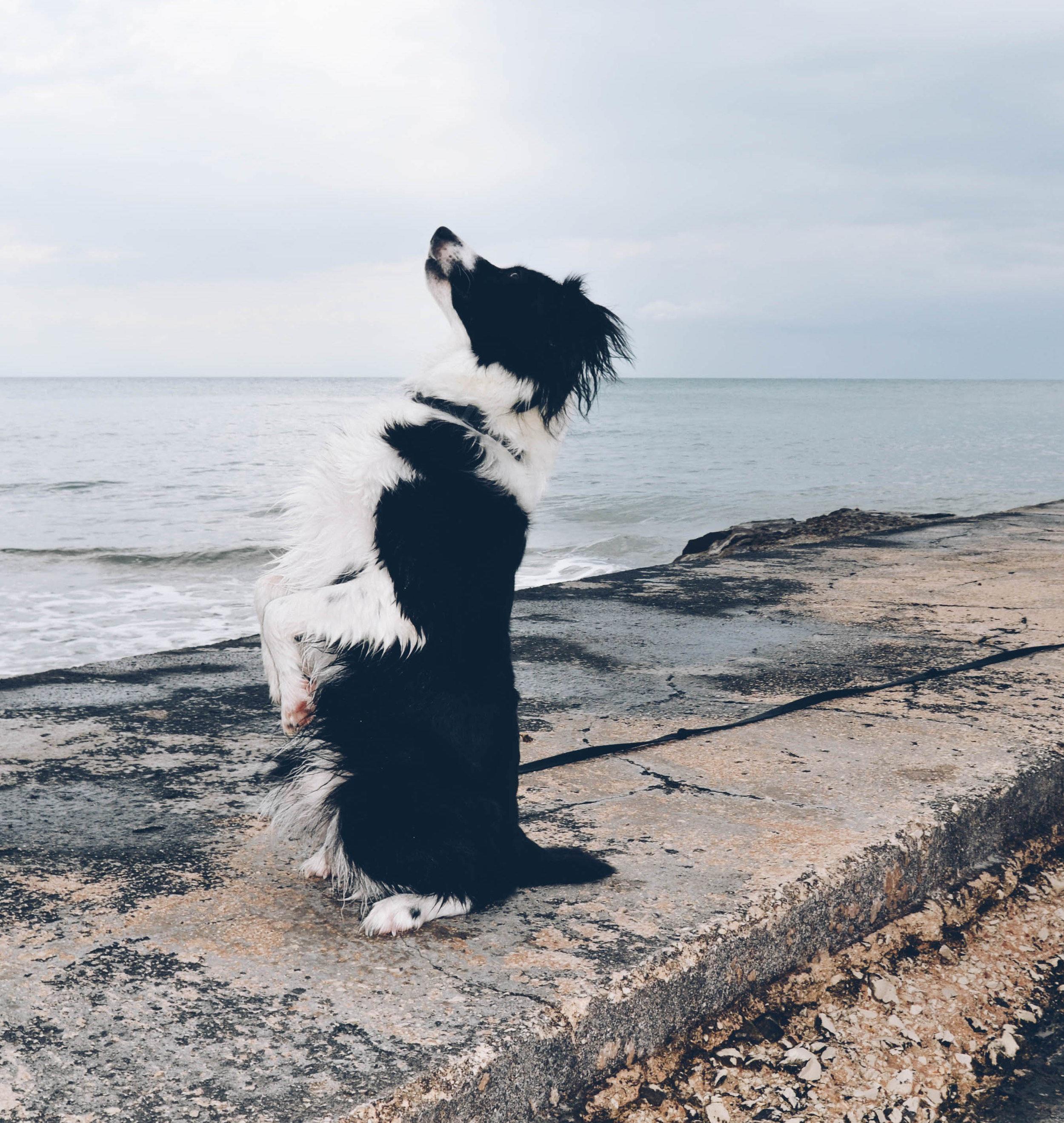 zak-dog-training-revolution