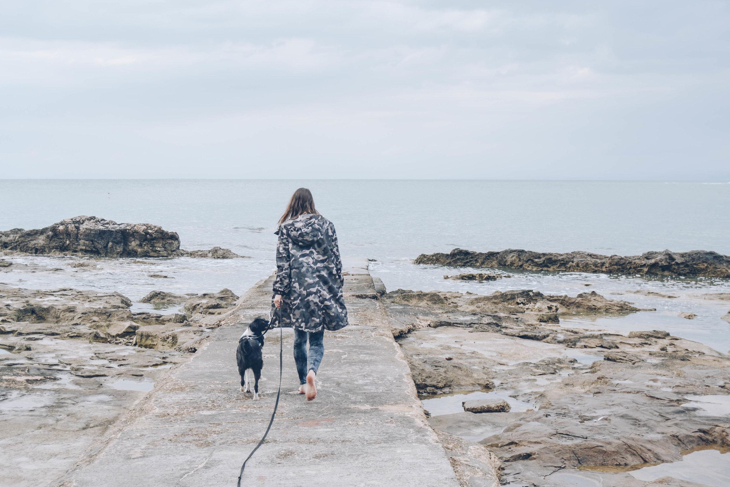 dog-training-undermined