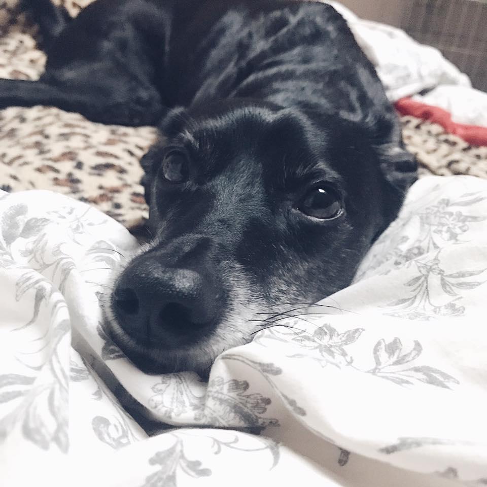 reactive-dog-outburst