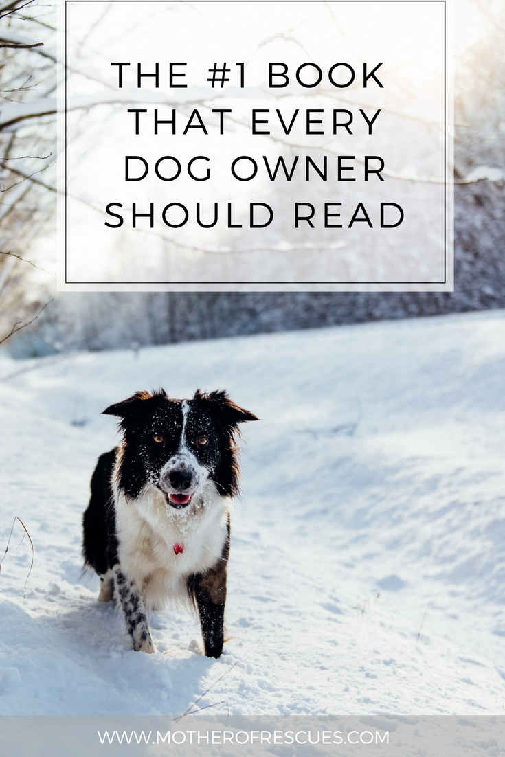 Share this blog post on Pinterest to spread the word! -