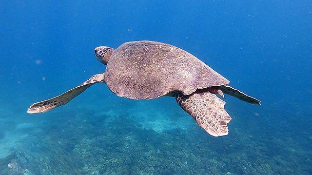 🐢 ¿Como podemos ayudar a proteger los océanos y combatir el cambio climático? 🌊  1. 🍶💧Utiliza tu propia botella re utilizable para el agua. Piensa en cuantas botellas de agua has tirado en la última semana? En el último mes? Todo va a dar al Mar! 😭 2. 🚶🏽♂️🚇Para reducir tus emisiones de gases de efecto invernadero usa transporte público o camina todas las veces que puedas en vez de usar tu propio auto. ¡Esos 20 minutos a pie hacen un cambio! 3. 🐄💩Disminuye tu consumo de carne. Todos los gases producidos por las vacas terminan en la atmósfera y son una de las principales causas del efecto invernadero 🛑 Sigue @burwigan y hagamos del arte un arma para luchar contra el cambio climático y el plástico . . . . . #Panama #traveler #climatechangewarrior #climatechange #instatravel #travelblogger #traveler #panama #pty #indigenousguys #gopro #burwigan #vegan #zerowastepanama #vegains #vegano #nomeat  #climatewarrior #noplastic #stopplastic