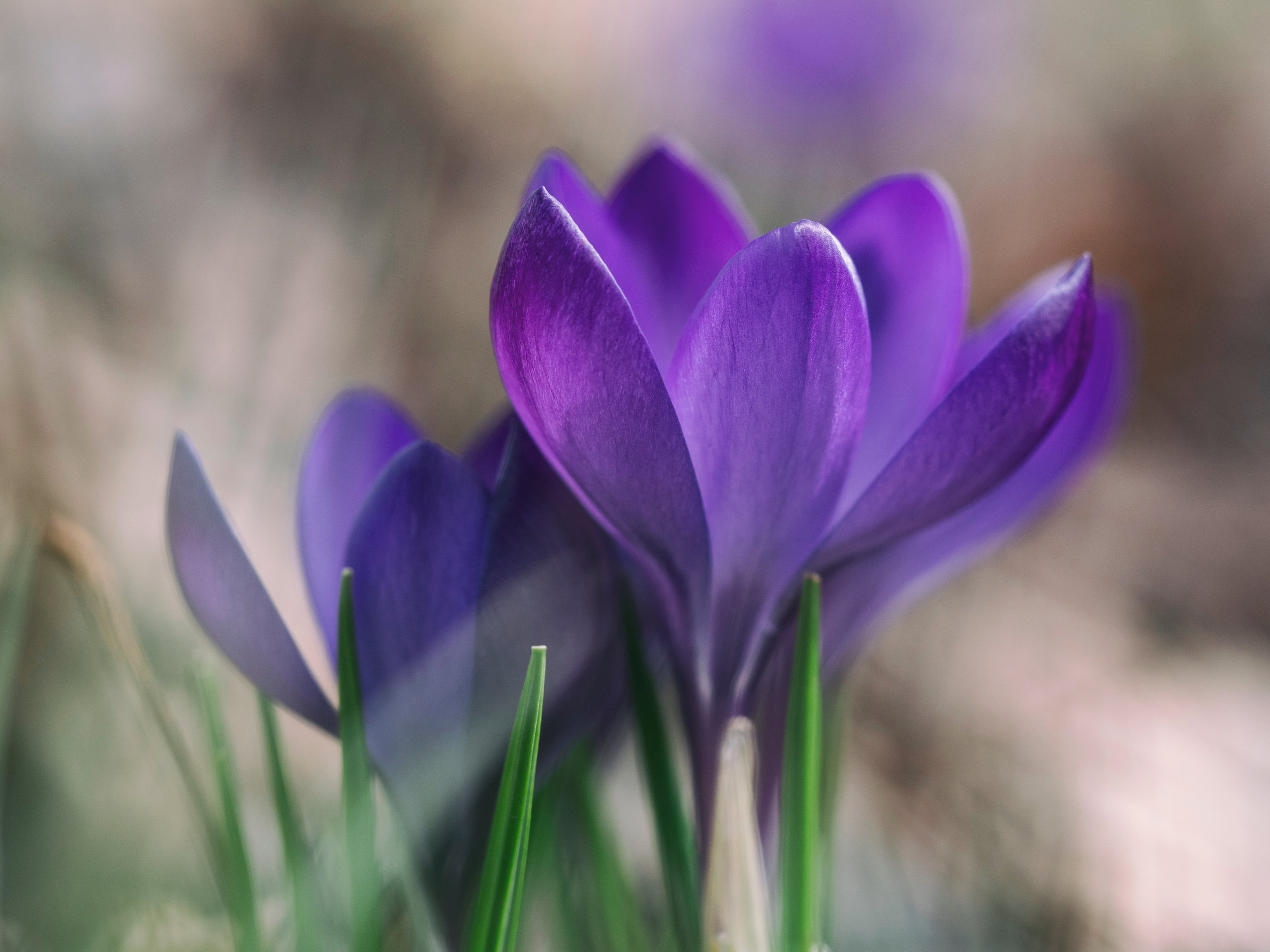 kahm clinic how we are different crocus flowers stamford ct