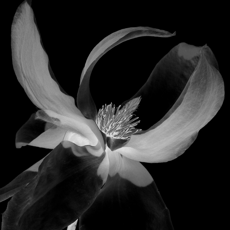 glen_johnston_photography_flora_clematis_2.jpg