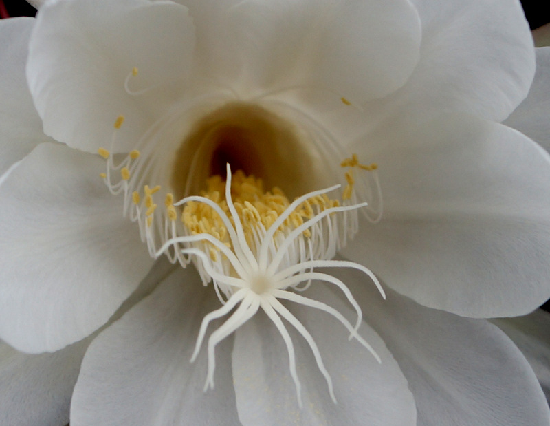 glen_johnston_photography_cereus_2.jpg