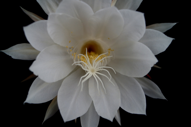glen_johnston_photography_cereus_3.jpg