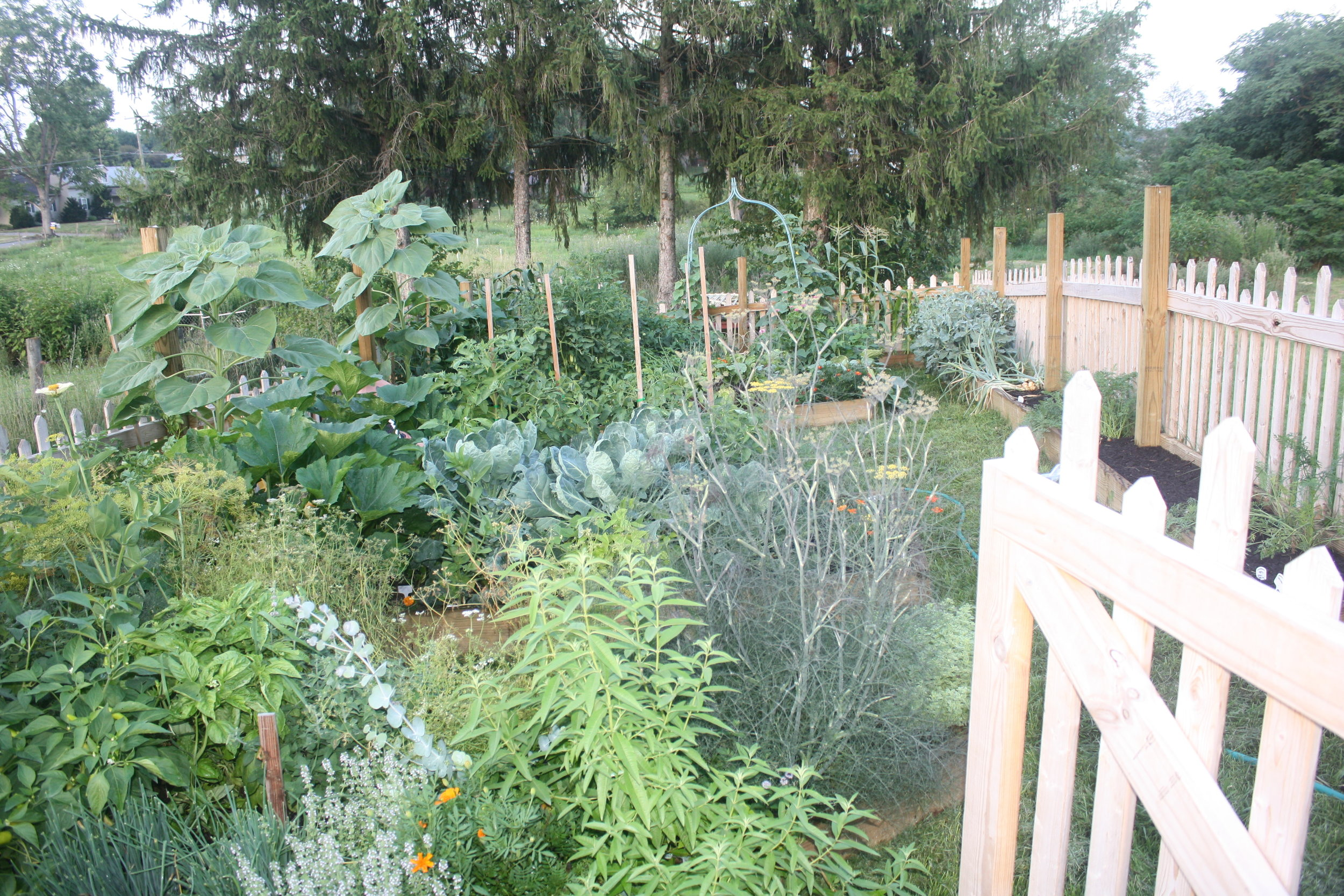 Our veggie garden in it's full summer glory.