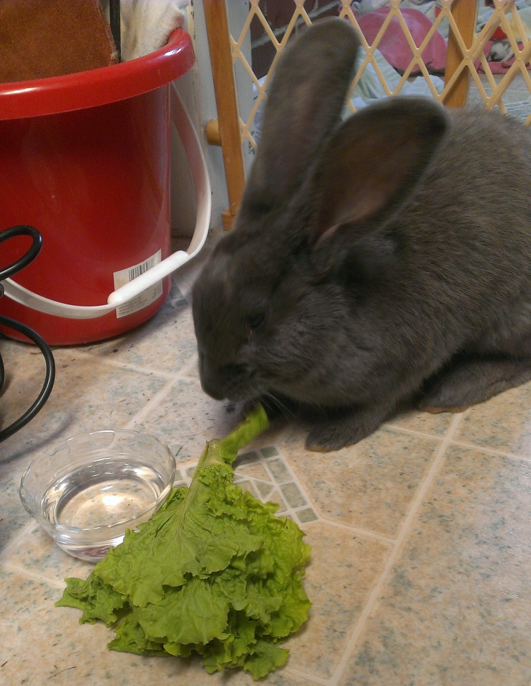 wabbit.jpg