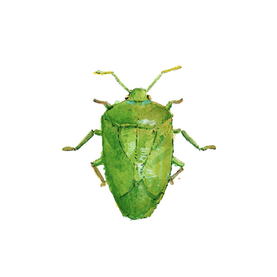 green beetle.jpg