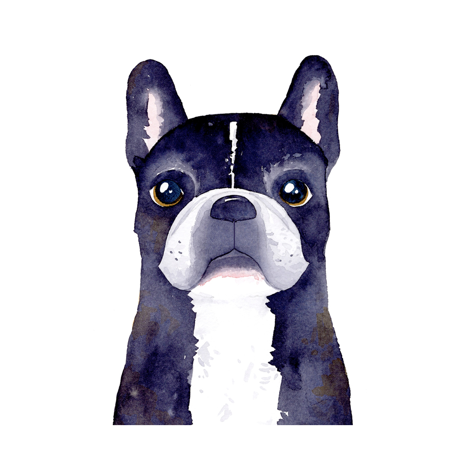 french bulldog.jpg