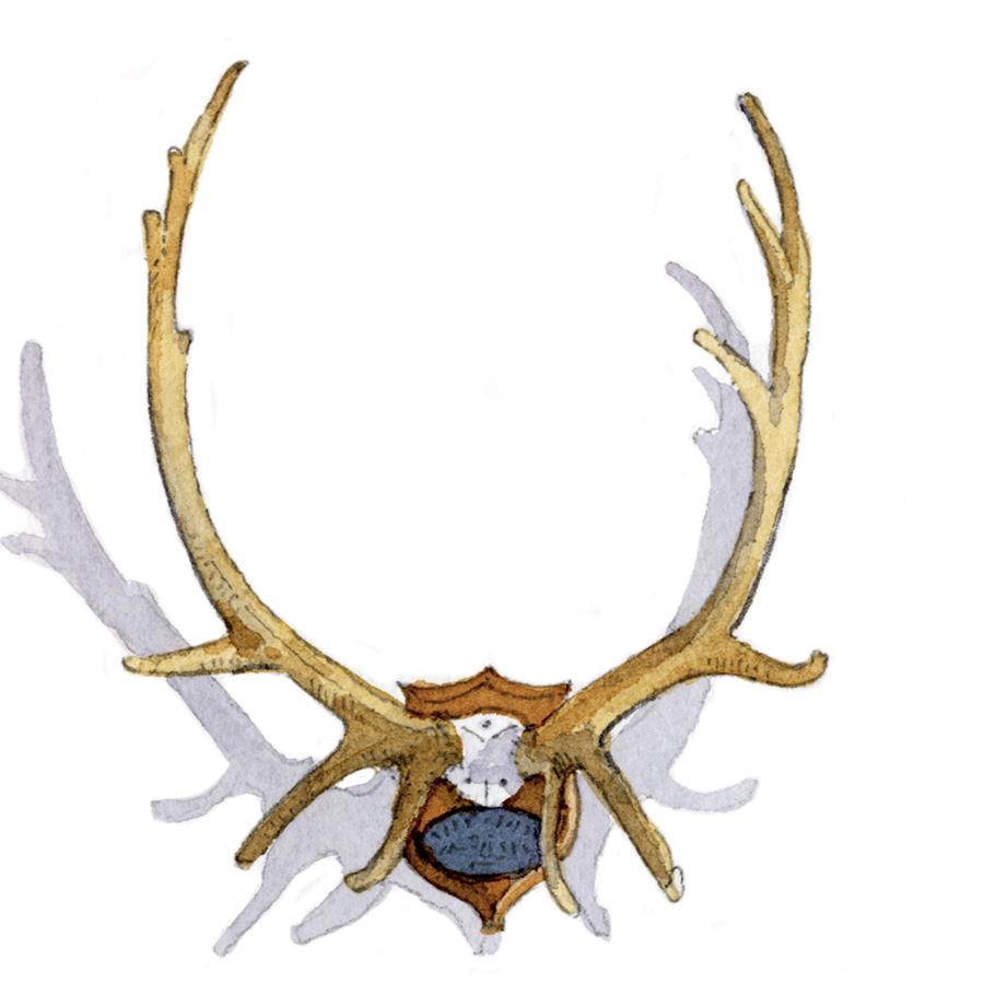 deer antlers.jpg