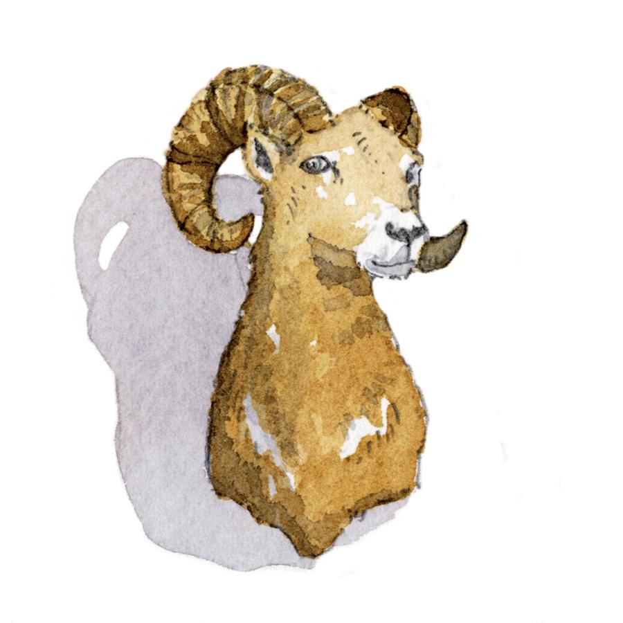 antelope bust.jpg