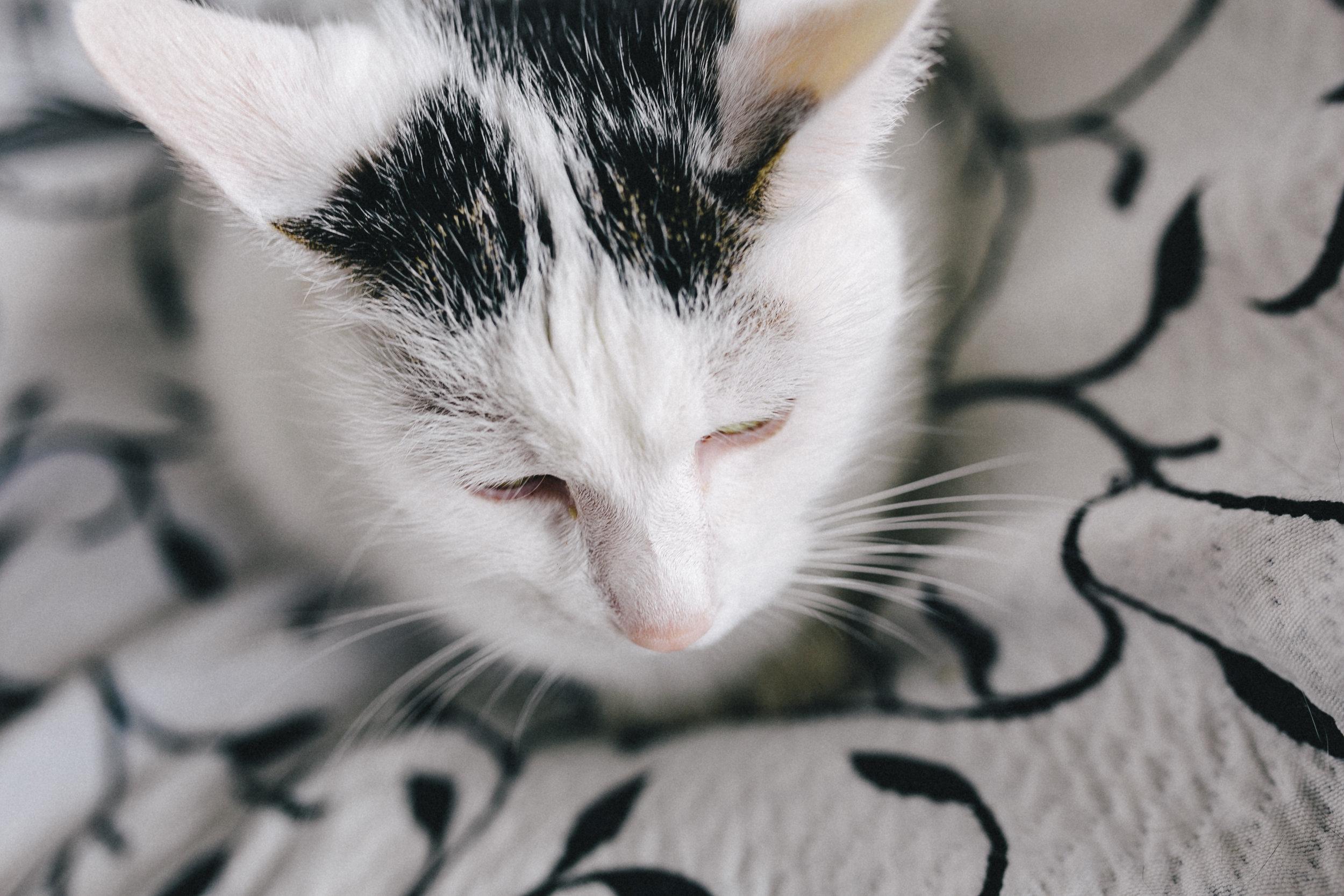 kaboompics_Portraits of white sad cat.jpg