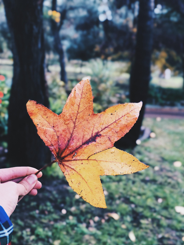Portrait leaf autumn focus orange