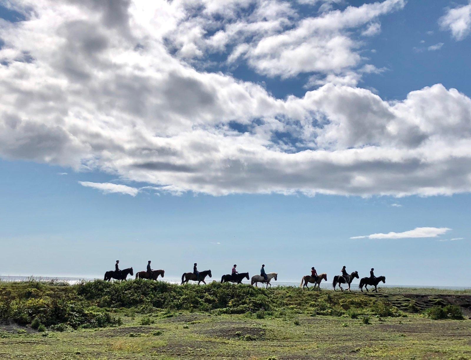 Horses Iceland.JPG