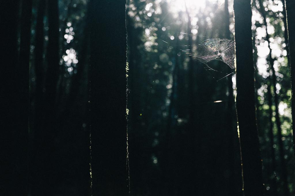 Melissa_Findley-Broadsheet_Tasmania-WEB-31
